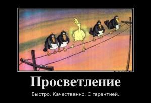 14562676_1cd429ae3cf0a894c10ced3cdf8353f9_800